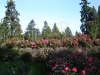 091008_rose_garden_010
